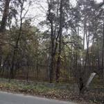 Целебные свойства деревьев