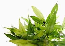 Народное лечение насморка травами