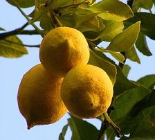 Лимонна дієта для схуднення