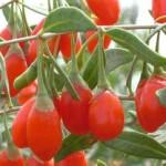 Чим корисні ягоди годжі?