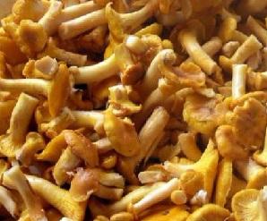 Лисички від глистів - народні рецепти