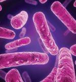 Які бактерії є корисними для людини?