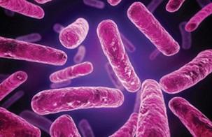 Які бактерії корисні для людини?