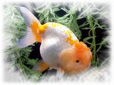 Якщо сниться риба, то що це означає?