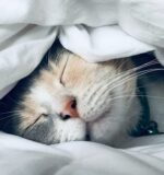 Не варто спати у вихідні про запас.